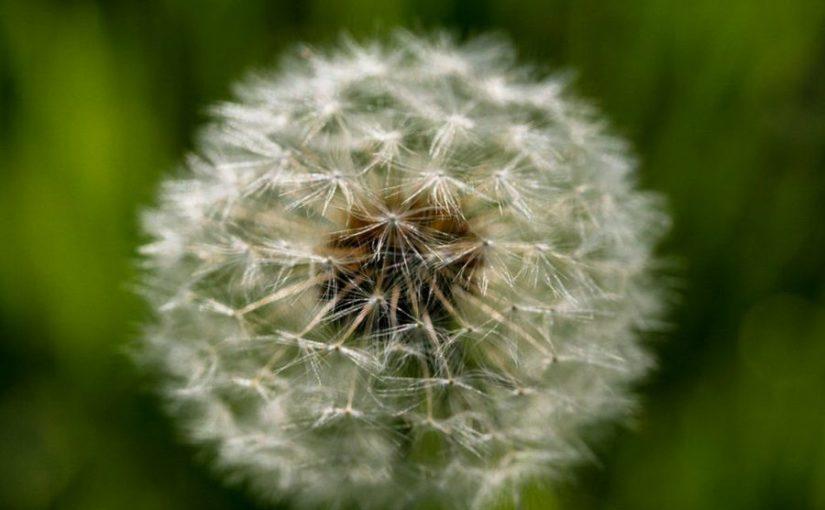 Alergia a plantas: você sabe o que planta em seus vasos?