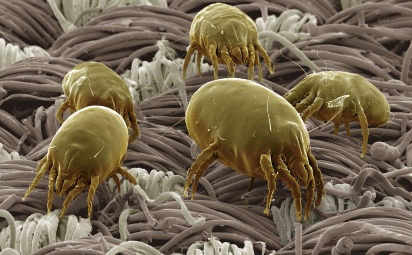 Como evitar as crises de alergia a ácaros?