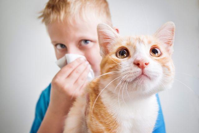 Como acontece a alergia aos pelos de animais?