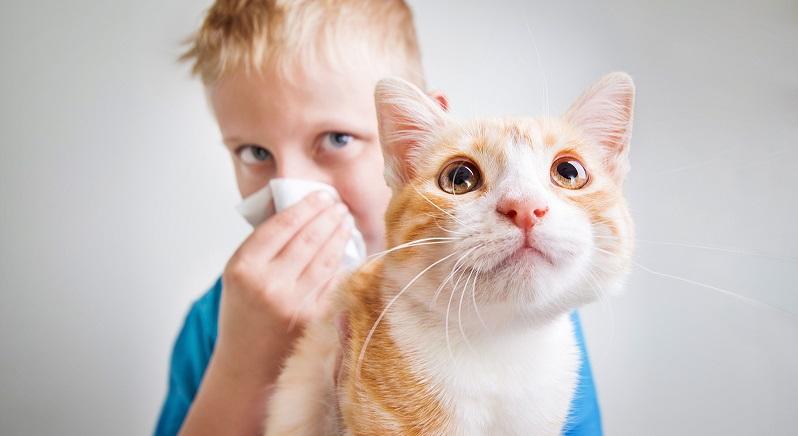 O que fazer em caso de alergia ao pet?