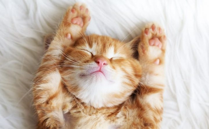 Vacina para quem tem alergia a gato funciona?