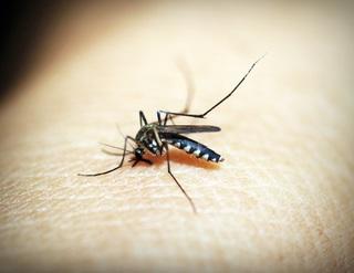 Verão: picadas de inseto e alergia